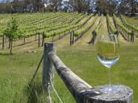 Photo of Canberra's wineries to lure visitors with Wine, Roses and All that Jazz