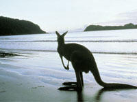 Photo of Kangaroo Island gets $6m campaign boost
