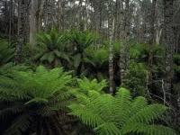 Photo of Eco-Friendly Retreat for Gippsland