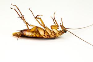 Photo of Pest infestations result in $1.7 billion lost revenue for Australian businesses
