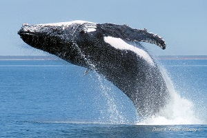 Photo of Winter is coming… and so are our whales