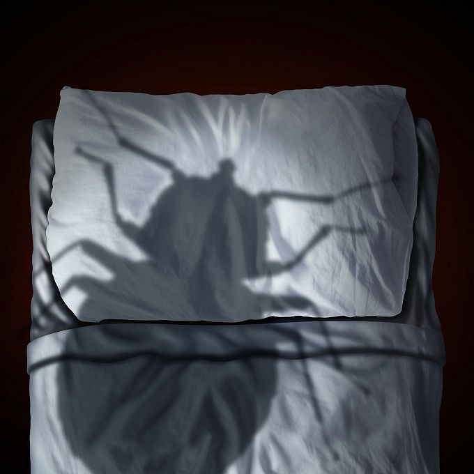 Photo of The worldwide war on bed bugs