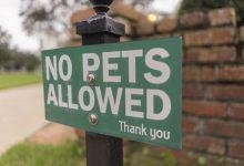 Photo of Owner 'ecstatic' as tribunal overturns strata pet ban