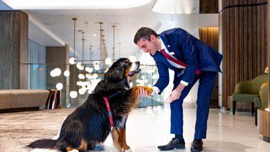 pet-friendly hotel
